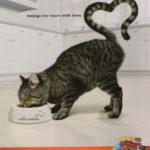 Agencja castingowa kotów