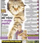 Koty do reklamy - Koci-ekspert.pl